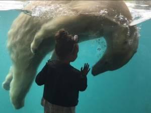 Adieu Sizzel en Todz. Stuur ons je afscheidsfoto van de ijsberen!