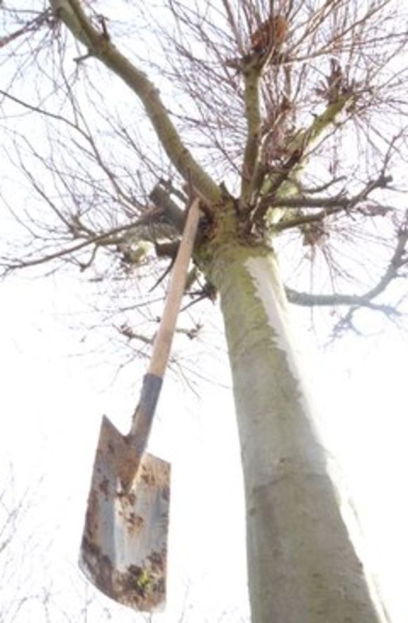 Lierde gaat deze legislatuur 1.000 bomen planten.