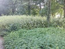 Wildgroei groen in Nijkerk aan banden