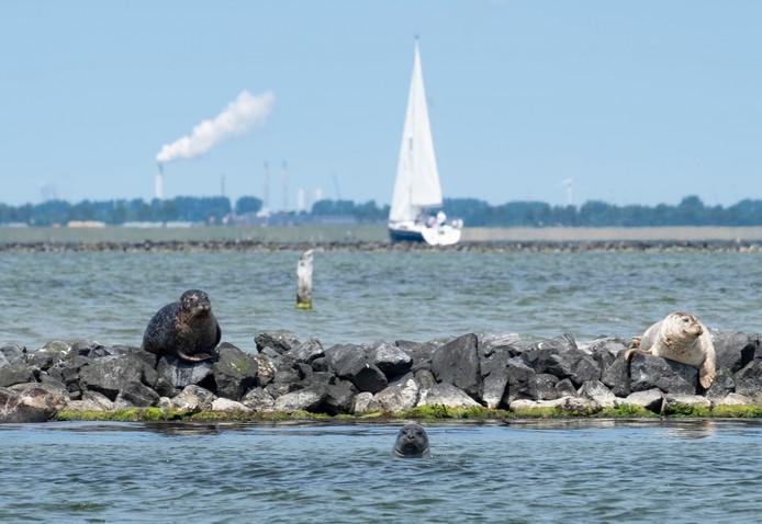 Vanaf 10 meter diepte is het Grevelingenmeer een 'deathzone'.