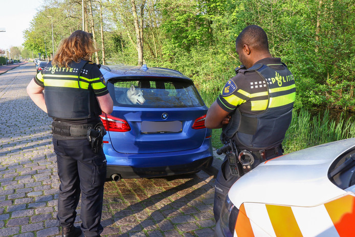 Eerder dit weekend greep de politie in toen een vrouw haar hond in Rotterdam-Kralingen in de auto achterliet toen ze ging eten in een restaurant.