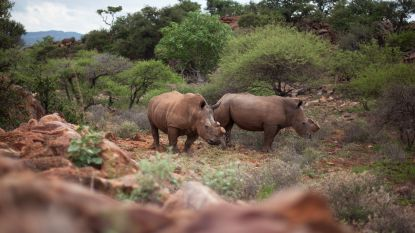 Hoe de bescherming van neushoorns en ander zeldzaam wild steeds meer op een oorlog begint te lijken