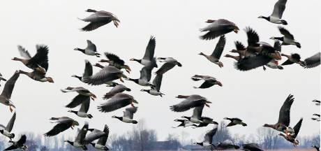 Doodzieke vogels in de regio, maar vogelgriep blijft onbevestigd