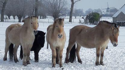"""Centrum voor hippotherapie verliest alle paarden na esdoornvergiftiging: """"Familie, leven en levenswerk kwijt"""""""