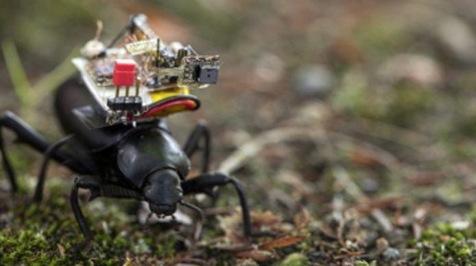 Cette caméra minuscule donne un aperçu de la vie d'un insecte.