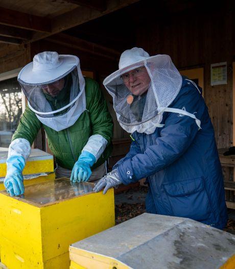 Imkers in regio Arnhem gaan ook zorgen voor wilde bijen, vlinders en andere insecten