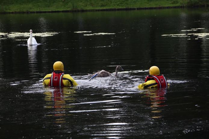 Brandweer probeert zwaan te redden