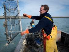 De visserij verantwoordelijk voor minder kreeft? 'Dat is wel erg kort door de bocht'