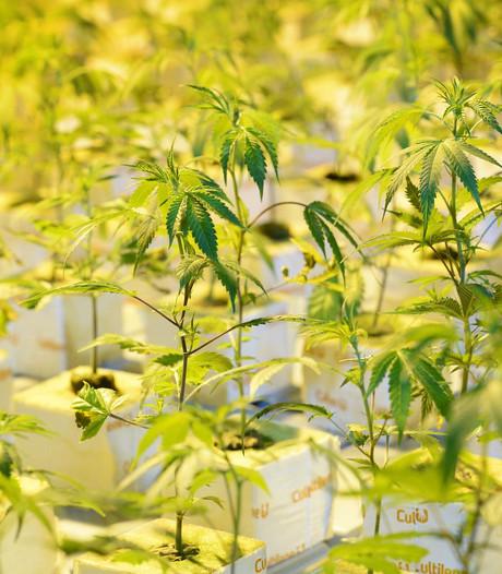 Hennepkwekerijen met 853 planten opgerold in Nijverdal
