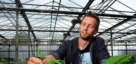 Deze prijswinnende thee groeit wél op Brabantse bodem