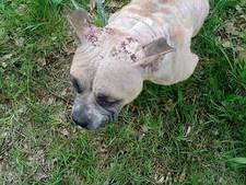 Zwaar verwaarloosde hond vastgebonden en verlaten