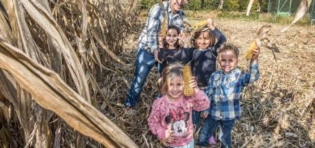 Maisdoolhof in Malden heeft 'bijzonder goed seizoen' achter de rug
