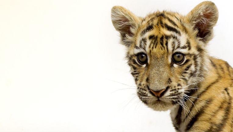 eda50f7fd63508 Circussen geen vergunning meer nodig voor wilde dieren | TROUW