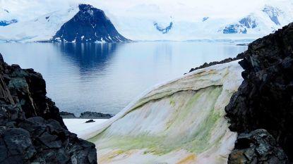 """Opvallende beelden: steeds meer """"groene sneeuw"""" op Antarctica"""