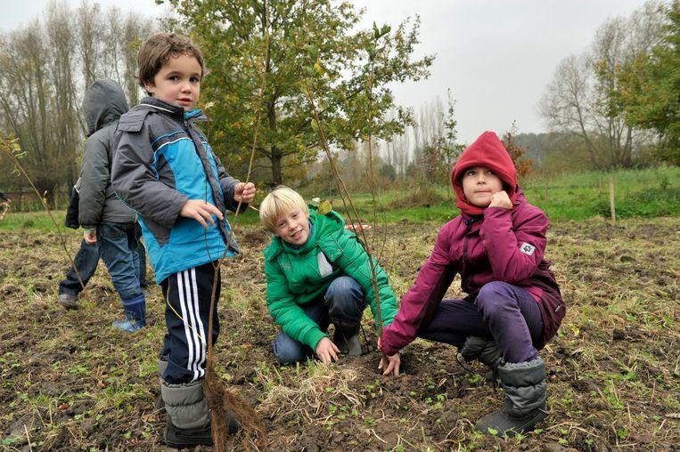 Archiefbeeld: In Serskamp planten schoolkinderen tweeduizend bomen aan voor het nieuwe Hazeveldbos.