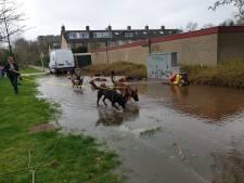 Straat in Schothorst blank door gesprongen waterleiding