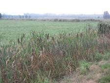 Wandelroute: Natte schoenen in zompige 'wetlands' van Leurse polder