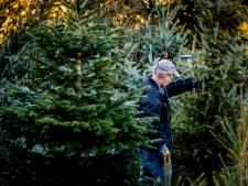 Leids kerstbomenasiel bij diversiteitstuin Vrij Groen weer open