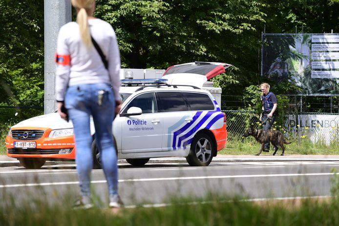 Een politieagent loopt langs de Leuvensesteenweg, in de buurt van de ingang van dierentuin Planckendael in Mechelen. Het gebied is afgezet nadat een jonge leeuwin uit haar verblijf ontsnapte.