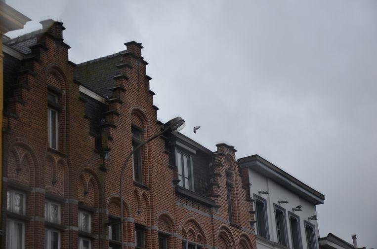 De pinnen op de trapgevels missen effect. De duiven maken er zelfs hun nest in.