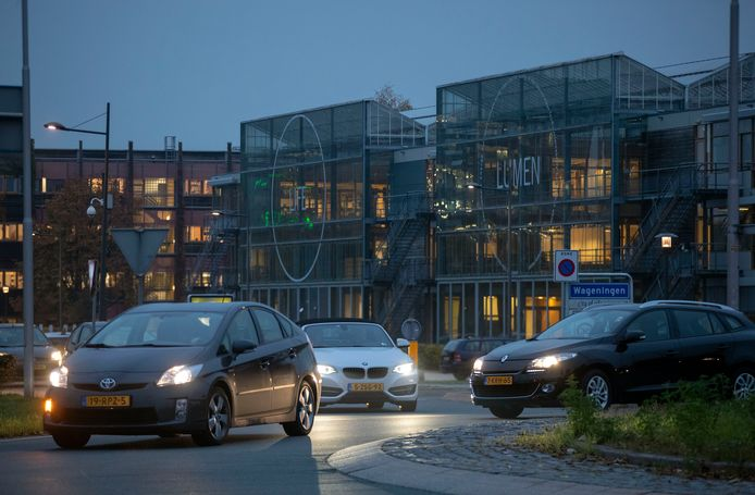 Drukte op de rotonde van de Mansholtlaan en de Droevendaalsesteeg in Wageningen tijdens de avondspits.