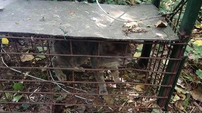 """Wildbeheereenheid: """"Laat je kat niet zomaar rondlopen"""""""