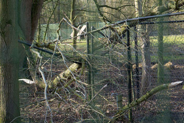Storm Ciara heeft ook Provinciaal Domein Puyenbroeck getroffen.