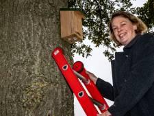 Eikenprocessierups blijft plaag, maar Deventer krijgt er mét bewoners meer grip op: 'Nestkastjes helpen écht tegen jeukrups'