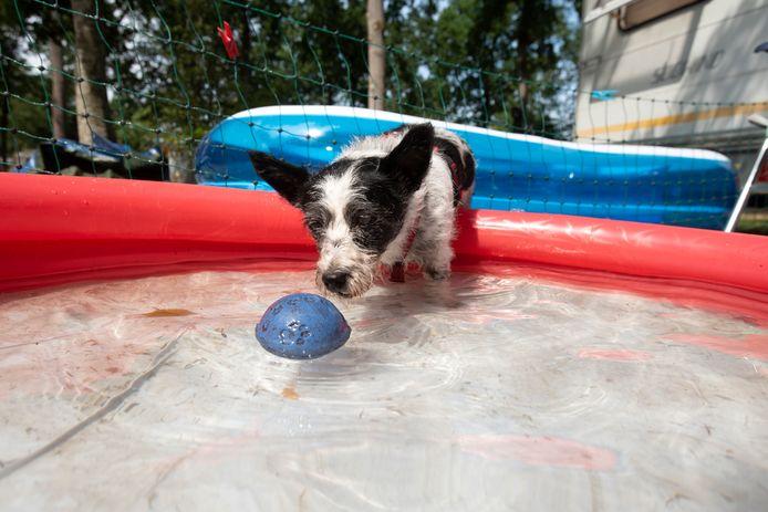 Hondje Shantie neemt een duik op Vakantiedorp De Jutberg in Laag-Soeren.