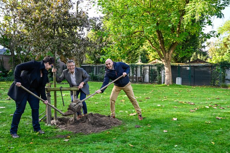 De boom werd vandaag aangeplant in Park Peeters.