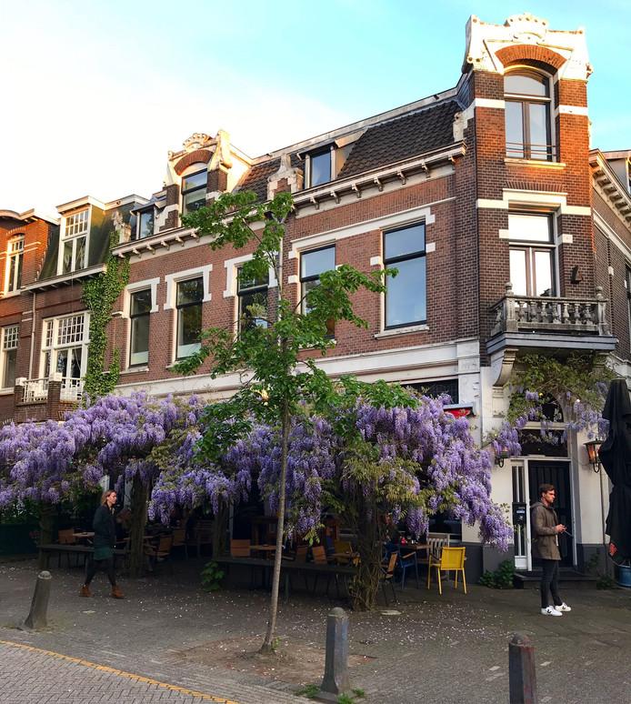 Een blauweregen fungeert als dak (of parasol) van een terras in Nijmegen.