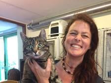 Verdwenen Brabantse kat na 1 jaar teruggevonden in Amsterdam: 'Ik had de hoop al opgegeven'