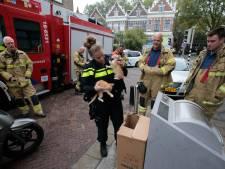 Kittens gedumpt in ondergrondse container in Dordrecht: 'Hoe triest'