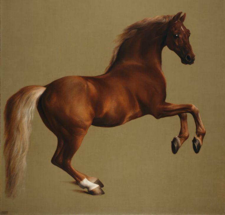 'Whistlejacket' van George Stubbs  Beeld