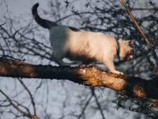 Eigenwijze poes barricadeert dagenlang boom in Emmer-Compascuum, totdat de brandweer komt 'blussen'