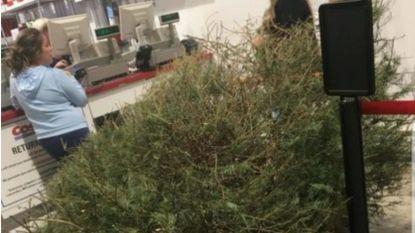 """Vrouw sleurt kerstboom naar de winkel en eist geld terug: """"Hij is dood"""""""