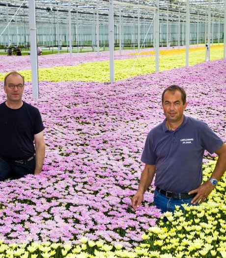 Corona sloeg als een bom in, maar nu is het weer vol gas voor bloemenkwekers