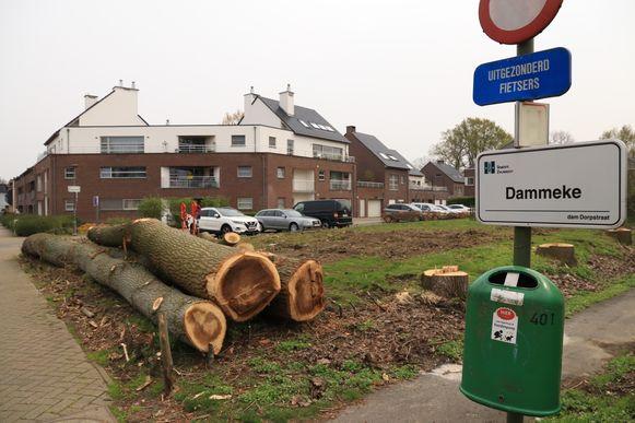 De bomen moesten gerooid worden omdat ze kaprijp waren en er een risico bestond voor de woningen in de buurt.