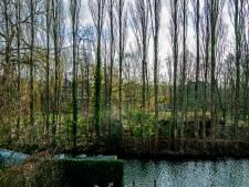 Enorme ophef over bomenkap, projectontwikkelaar noemt het 'storm in glas water'