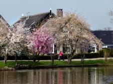 De lente zet bomen in bloei aan de Giessen