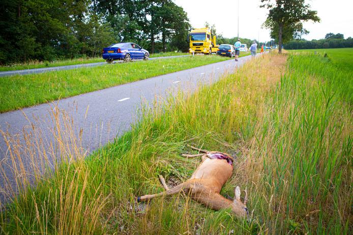 Deze ree heeft de aanrijding met een auto niet overleefd.