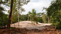Rechter verwerpt klacht: 3.000 bomen mogen gerooid worden in Ryckeveldebos
