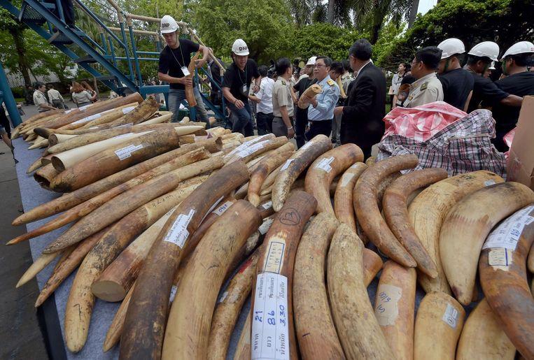 De Thaise overheid neemt regelmatig gesmokkeld ivoor in beslag. Beeld afp
