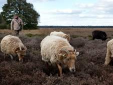 Stikstof op de kaart: de natuur in Drenthe kleurt diep donkerrood