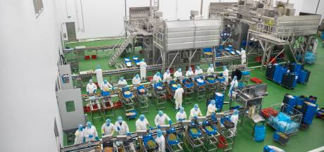 Pluimveeconcern Plukon lijft Duitse kuikenboerderij in