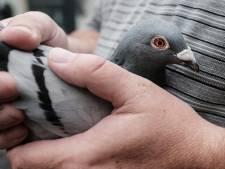 Brandweer redt duif uit schoorsteen in Sprundel