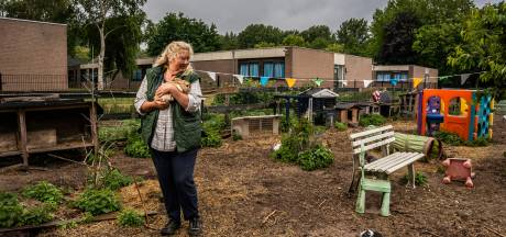 De dader van de kippenroof bij Sunflowers Ranch is bekend: het is een vos