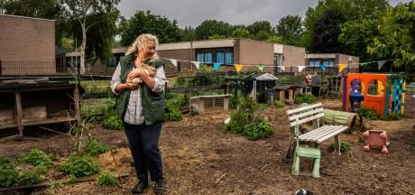 De dader van de kippenroof bij Sunflowers Ranch is bekend: het is een vos