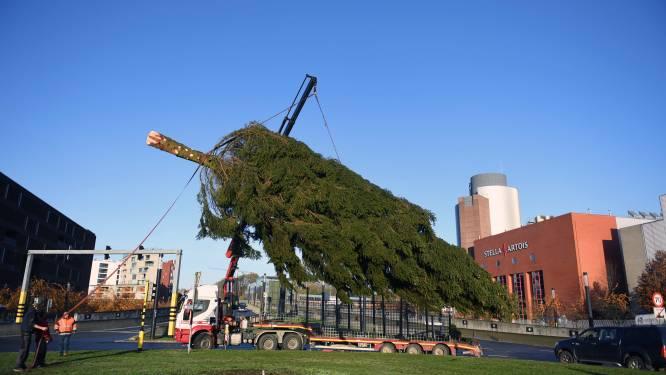 Kerstboom op het Joanna-Maria Artoisplein is 17 meter hoog en komt uit de Ardennen