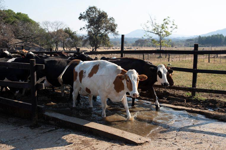 Een landbouwbedrijf nabij Harare, de hoofdstad van Zimbabwe.  Beeld Getty Images